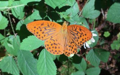 Rückblick Raupen-Schmetterlings-Projekt