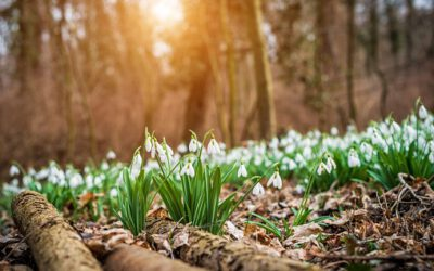 Frühlingselternbrief